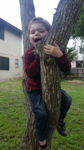 Jay in a tree